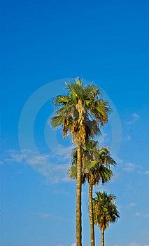 Palm Stock Photography - Image: 14810992