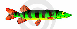 Pike Stock Images - Image: 14816174