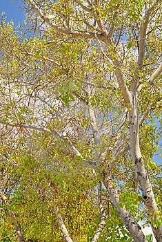 Urban Trees. Stock Photography - Image: 14832782