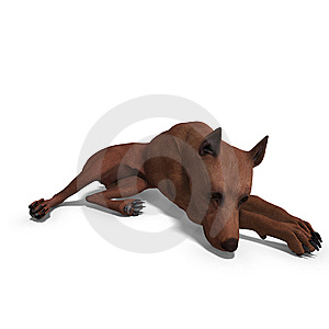 Miniature Pinscher Dog Royalty Free Stock Photography - Image: 14835327