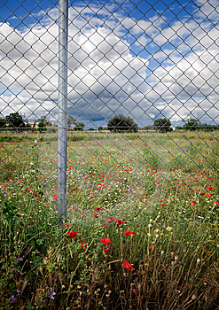 Fence And Flowers Stock Images - Image: 14838794