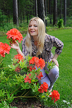Beautiful Gardener Woman With Red Flower Bush Stock Images - Image: 14840224