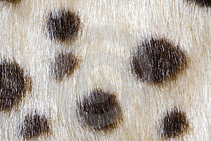 Texture Of Leopardskin Pattern Stock Photography - Image: 14846842