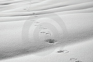 Animal Path In Snow Stock Image - Image: 14847681