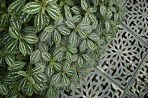 Floral Pattern And Metal Ornament Royalty Free Stock Photo - Image: 14847685
