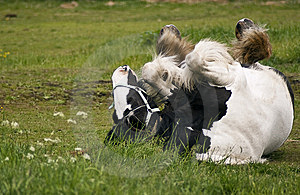Rolling Horse Royalty Free Stock Image - Image: 14851186