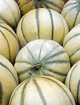 Cataloupe Melons Royalty Free Stock Images - Image: 14854019