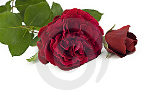 Red Roses Royalty Free Stock Photos - Image: 14854648