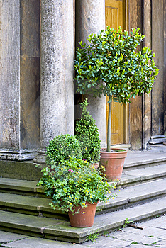 Entrance With Plants Royalty Free Stock Images - Image: 14854659