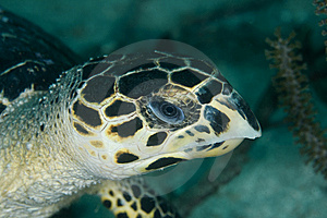 Turtle Head Royalty Free Stock Images - Image: 14856909