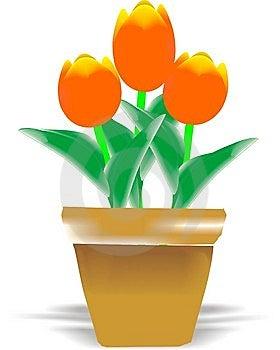 Tulips Royalty Free Stock Image - Image: 14857556