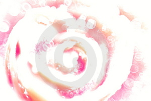 Rose Royalty Free Stock Photo - Image: 14857685
