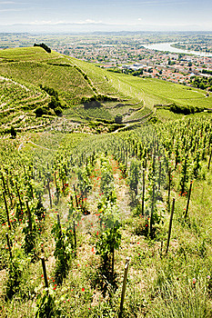 Vineyard In France Royalty Free Stock Photography - Image: 14858207