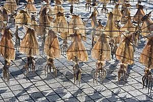 De Ploeg Van De Pijlinktvis Royalty-vrije Stock Foto's - Afbeelding: 14860588