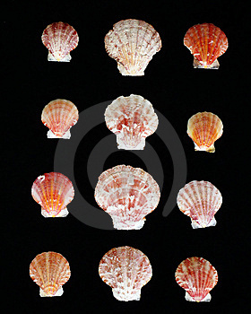 Variety Of Sea Shells Stock Images - Image: 14875924