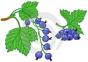 Currant Branch Stock Photos - Image: 14876483