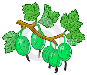 Gooseberry Branch Royalty Free Stock Photos - Image: 14876508