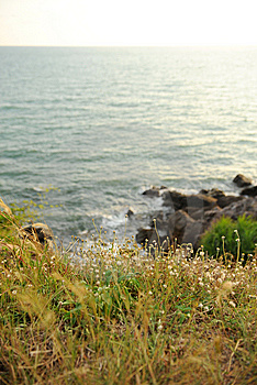 Flower On The Rock 2 Royalty Free Stock Photography - Image: 14876727