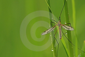 Insect Close Up On Wet Grass Stems Stock Photography - Image: 14879172