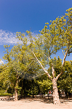 Treetops Stock Images - Image: 14881074
