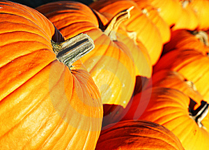 Large Pumpkins In A Row Stock Photography - Image: 14882982