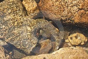 Hiding Fish Royalty Free Stock Photography - Image: 14886937