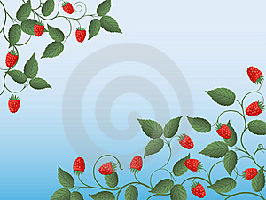 Raspberry Royalty Free Stock Images - Image: 14889319