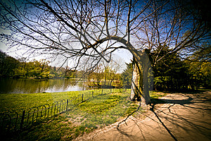 Paths In The Park Royalty Free Stock Image - Image: 14890386