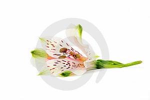 Flower Arrangement Stock Photos - Image: 14893123