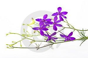Flower Arrangement Royalty Free Stock Image - Image: 14894716