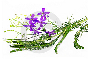 Flower Arrangement Royalty Free Stock Photo - Image: 14894725
