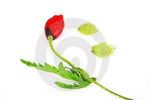 Flower Arrangement Stock Image - Image: 14894781