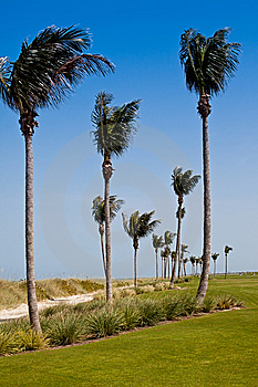 Golf Course In Florida Stock Images - Image: 14894964