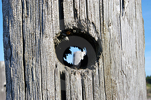 Hole In Wooden Pole Royalty Free Stock Photography - Image: 1494517