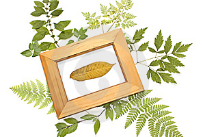 Dried Leaf In A Frame Royalty Free Stock Photo - Image: 14901705