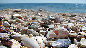 Shells And Stones Royalty Free Stock Photo - Image: 14906805