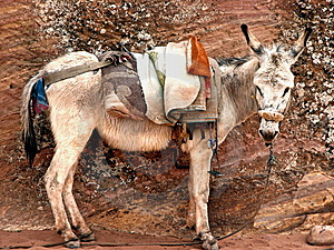 Donkey In Petra, Jordan Royalty Free Stock Photography - Image: 14913087