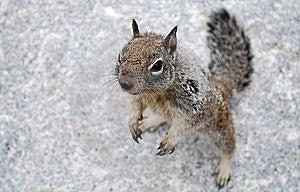 Chipmunk On Granite Stock Photos - Image: 14913193
