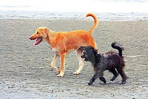 Dog Walk Stock Images - Image: 14914184