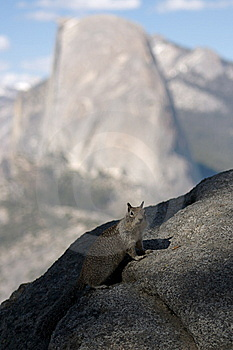 Half Dome Squirrel Royalty Free Stock Photo - Image: 14923505