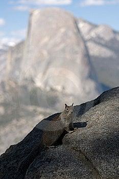 Half Dome Squirrel Royalty Free Stock Photo - Image: 14923505