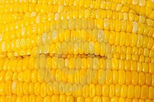 Corn Royalty Free Stock Photo - Image: 14924505