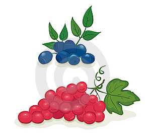 Grapes And Blueberries Stock Image - Image: 14925721
