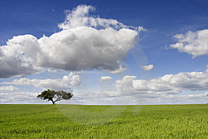 Spring Landscape Royalty Free Stock Photos - Image: 14928528