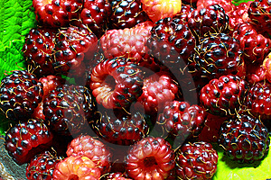 Red And Purple Raspberries Stock Images - Image: 14929574