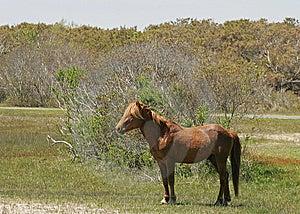Pony 2 Royalty Free Stock Images - Image: 14938119