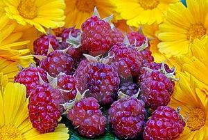 Ripe Appetizing Raspberry Royalty Free Stock Photo - Image: 14938255
