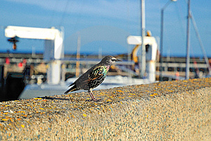 Bird On The Parapet Stock Images - Image: 14938654