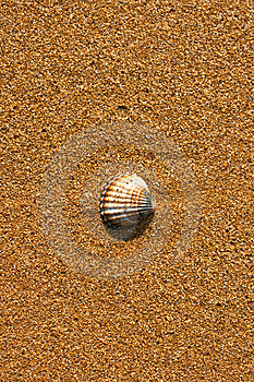 Scallop Shell On Beach Stock Image - Image: 14941441