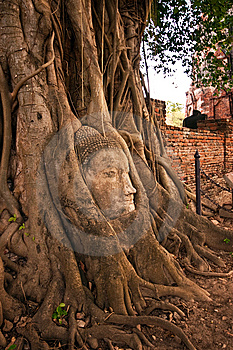 Buddha's Head In The Tree Royalty Free Stock Photography - Image: 14943287